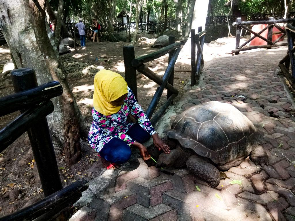 tortoise zanzibar