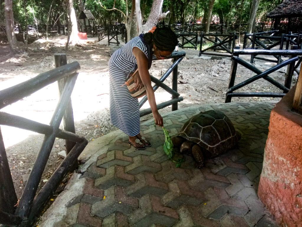 Tortoise in zanzibar